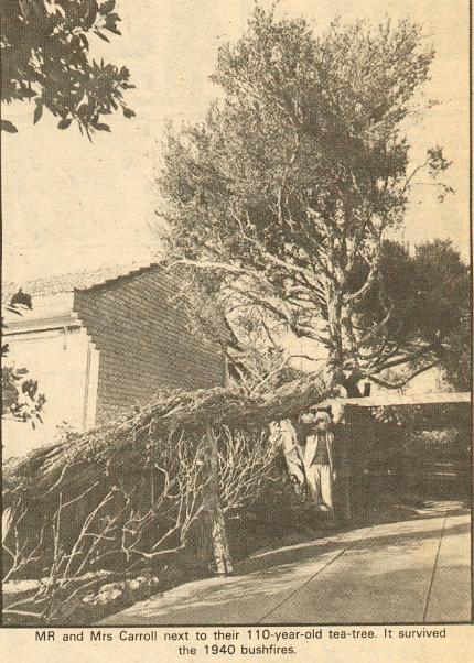 carroll tree